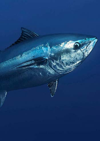 Mercury Exposure From Fish